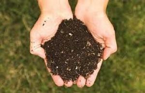 organic soil